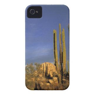 México, Baja del Norte, nacional del desierto de iPhone 4 Case-Mate Funda