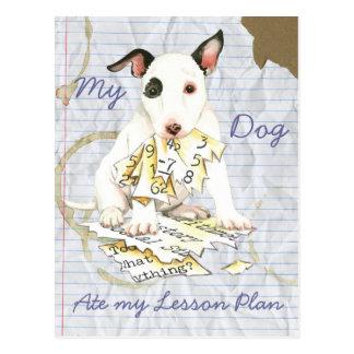 Mi bull terrier miniatura comió mi plan de lección postal