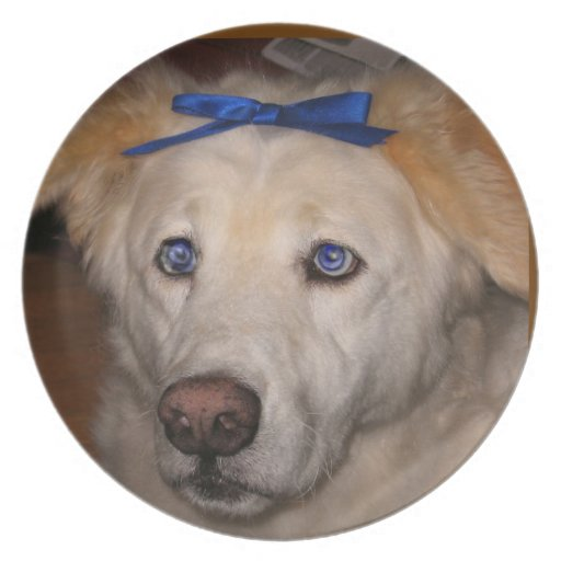 Mi placa del perro plato