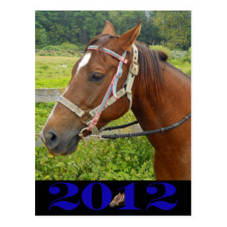 Mi postal del caballo