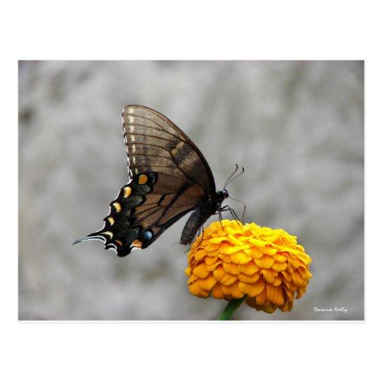 Mi tarjeta de la mariposa