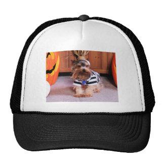 Mickey - Yorkshire Terrier - Shannon Gorro De Camionero