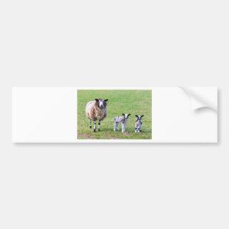 Mime a las ovejas con dos corderos recién nacidos pegatina para coche