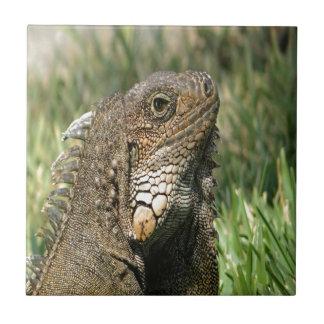 mirada de en-Ecuador de las iguanas adelante a la  Azulejo