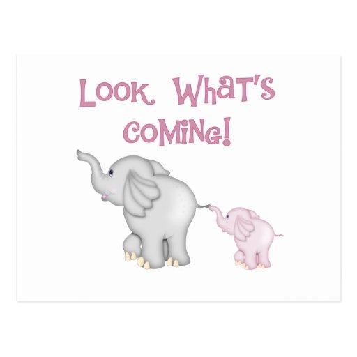 Mirada de los elefantes rosados qué está viniendo tarjetas postales