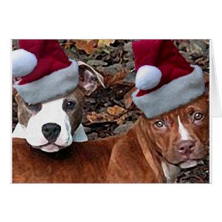 Mirada del navidad de Pitbulls en tarjetas de