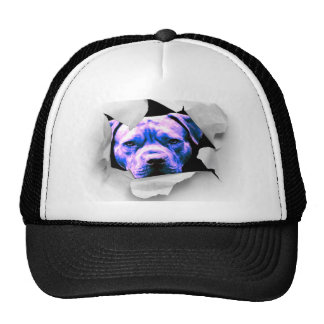 Mire a escondidas un gorra del pitbull del abucheo