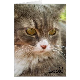 ¡Mire! Tarjeta de cumpleaños con el gato