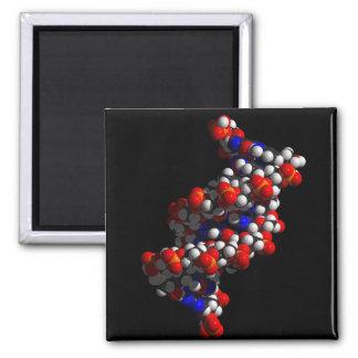 Modelo de la doble hélice de la DNA Imán Cuadrado
