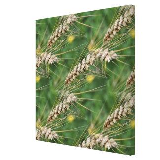 Modelo de la naturaleza de las hierbas secadas