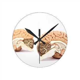 Modelo de los cerebros humanos aislado en el fondo reloj redondo mediano