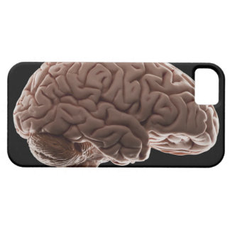 Modelo del cerebro humano, tiro del estudio funda para iPhone SE/5/5s