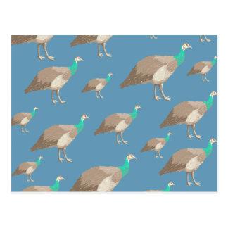Modelo del pájaro en el azul Peahens Tarjeta Postal