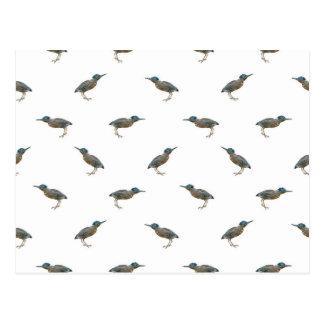 Modelo exótico del adorno de los pájaros postal