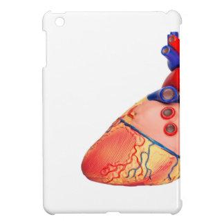Modelo humano del corazón en el fondo blanco