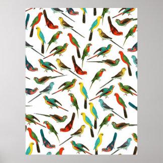 Modelo tropical colorido fresco de los pájaros de póster