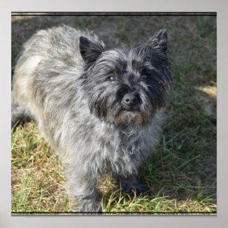 Mojón Terrier negro Póster
