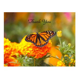 Monarca en una postal de la maravilla TY