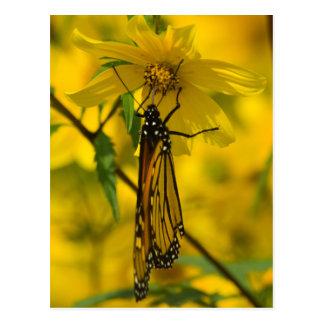 Monarca y postal amarilla de la flor