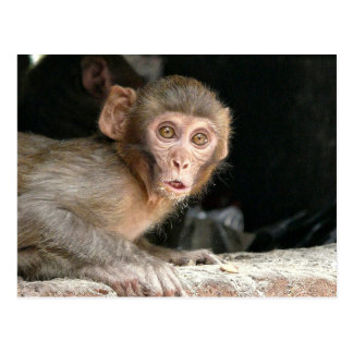 Mono asustado con la postal grande de los ojos