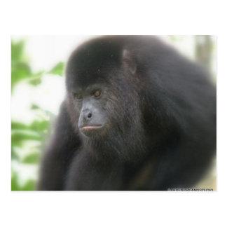 Mono de chillón en la postal de Belice