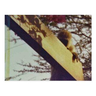 Mono que juega Peekaboo en la casa de campo de Kee Tarjeta Postal