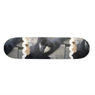 Monopatín blanco del mono del capuchón de Cheeked