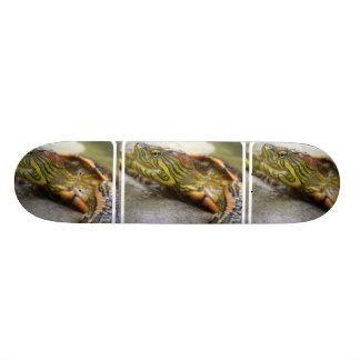 Monopatín de la identificación de la tortuga