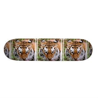 Monopatín de las marcas del tigre