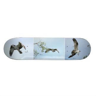 Monopatín de tres imágenes de Osprey