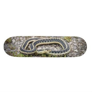 """Monopatín del ¾ de la serpiente 7"""""""