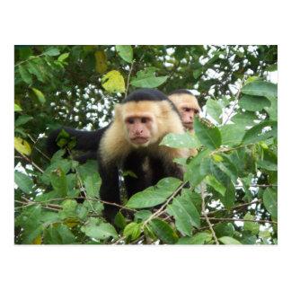 Monos del capuchón postal