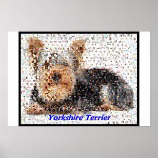Montaje de Yorkshire Terrier Póster