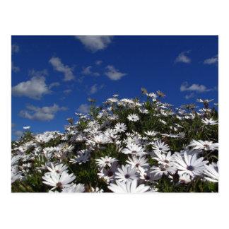montaña de la flor postal
