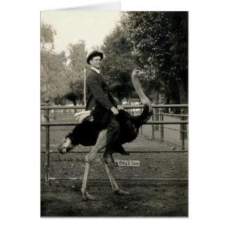 Montar a caballo 1910 de la avestruz tarjeta de felicitación
