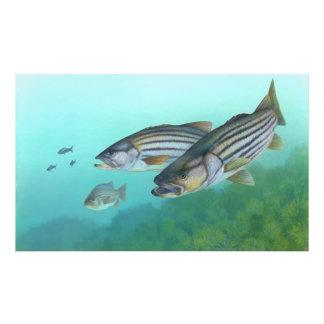 Morone atlántico Saxatilis de los pescados de la l Impresión Fotográfica