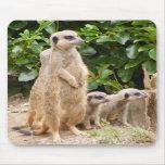 mousepad del meerkat alfombrilla de raton