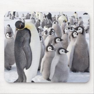 Mousepad del pingüino de emperador alfombrilla de ratón