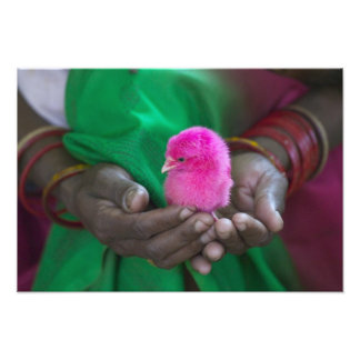 Mujer que sostiene un pequeño polluelo pintado con impresión fotográfica