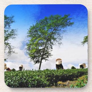 Mujeres que cosechan el té 2 posavasos de bebida