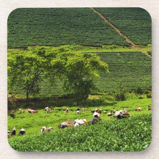 Mujeres que cosechan té posavasos de bebidas