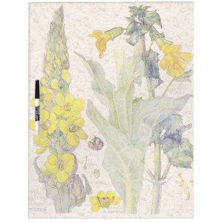 Mullein botánico florece al tablero seco del