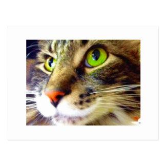 """Mullido dice hola"" la postal linda del gato Postal"