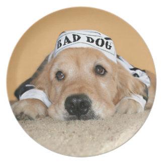 Mún preso del perro del golden retriever platos para fiestas