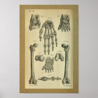 Muñeca 1850 de la mano de impresión de la anatomía