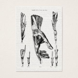 Músculos de la mano y de la muñeca del arte de la tarjeta de visita