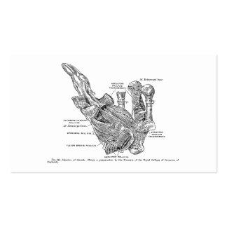 Músculos humanos del pulgar del ejemplo médico del tarjetas de visita