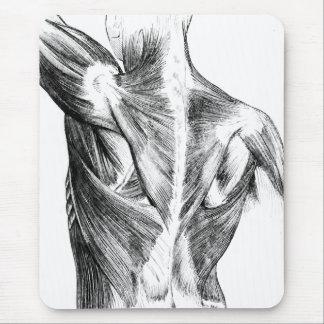 Músculos traseros de la anatomía el | del vintage alfombrilla de ratón
