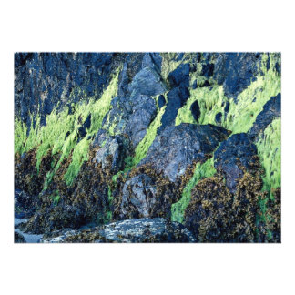 Musgo verde claro en rocas del bosque comunicado