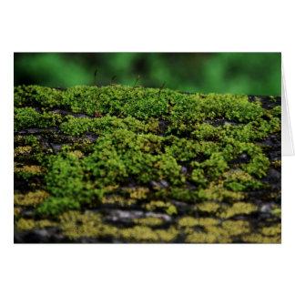 Musgo verde tarjeta de felicitación